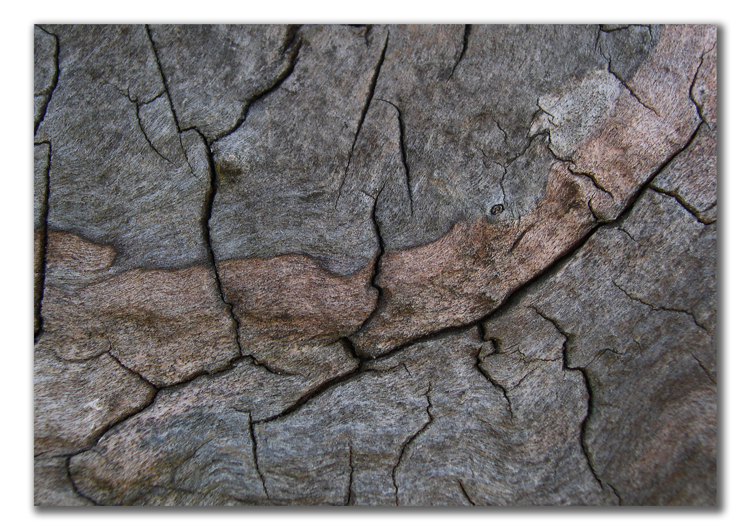 patterned and cracked driftwood