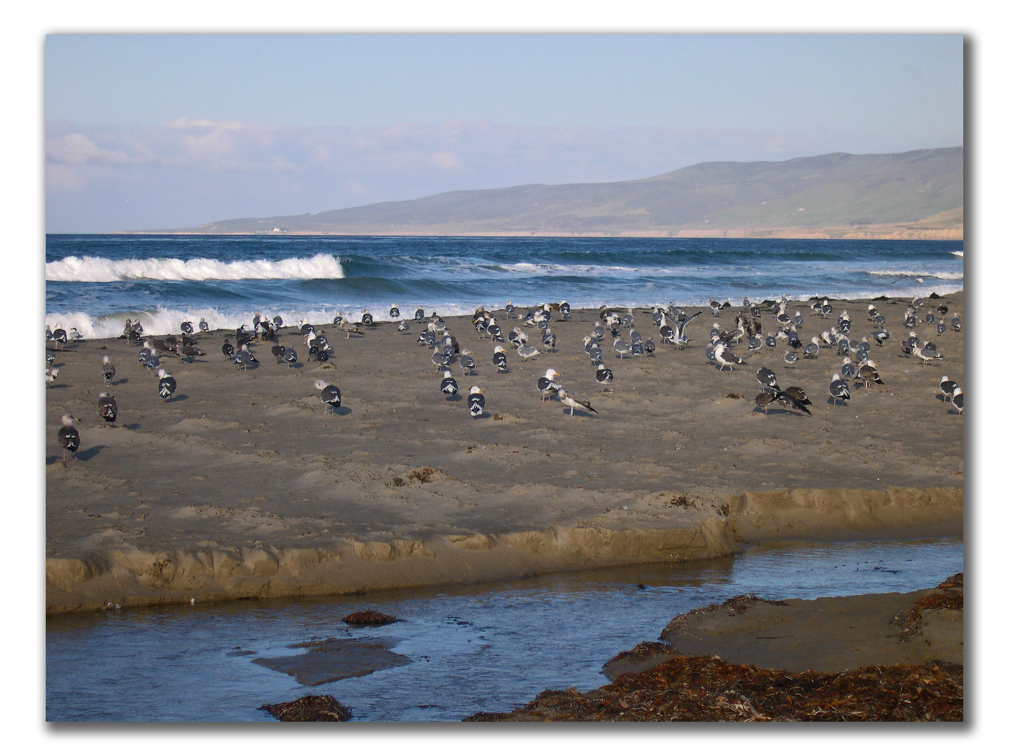 gulls spacing themselves evenly along the beach