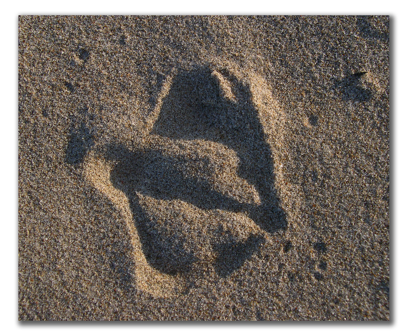pelican footprint in sand