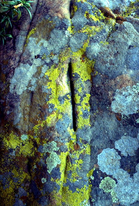 lichen covered stone