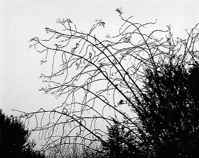 dried weeds against sky background