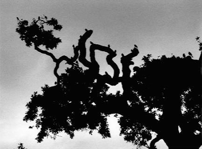 birds on branches in silhouette